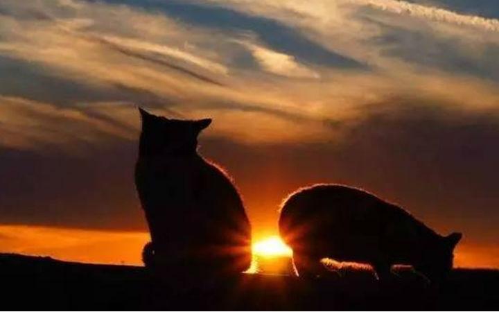 猫与水沟之间不可不说的故事
