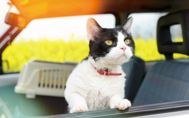 温馨感人的猫咪物语《旅猫日记》预告海报解禁