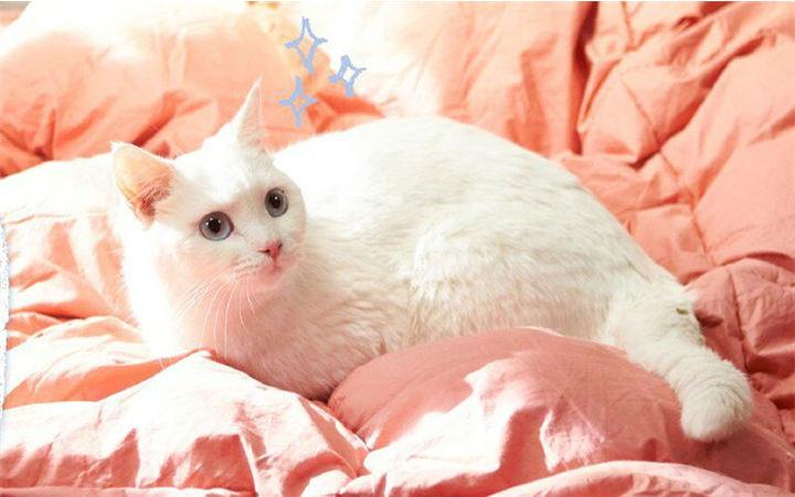 宠物情人之猫妖传,治愈系工业糖精