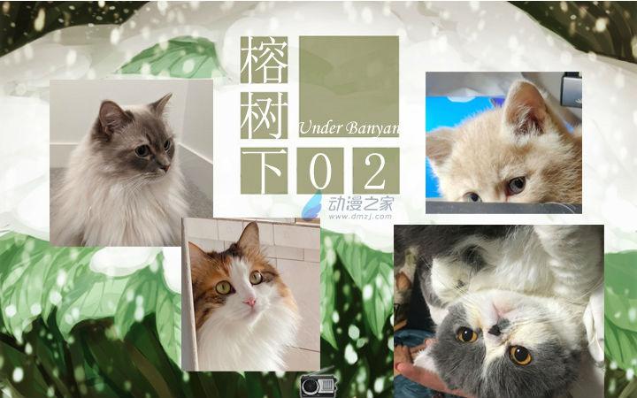 周五榕树下·汉化组的猫02