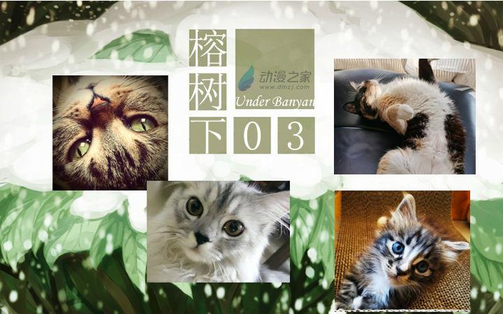 周五榕树下·汉化组的猫03承上启下