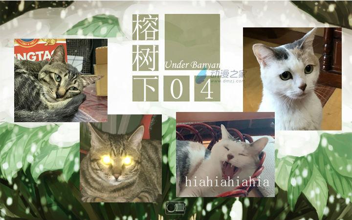 周五榕树下·汉化组的猫04绿茶猫