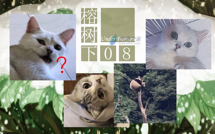 周五榕树下·汉化组的猫08咩咩咩的猫