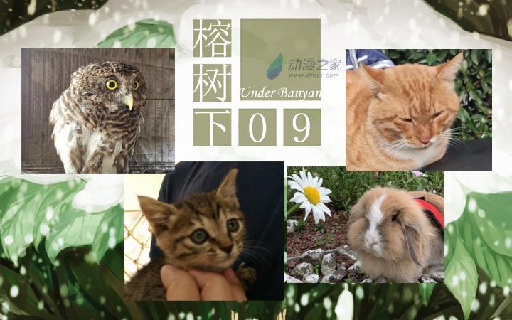 周五榕树下·汉化组的猫09飞橙的猫