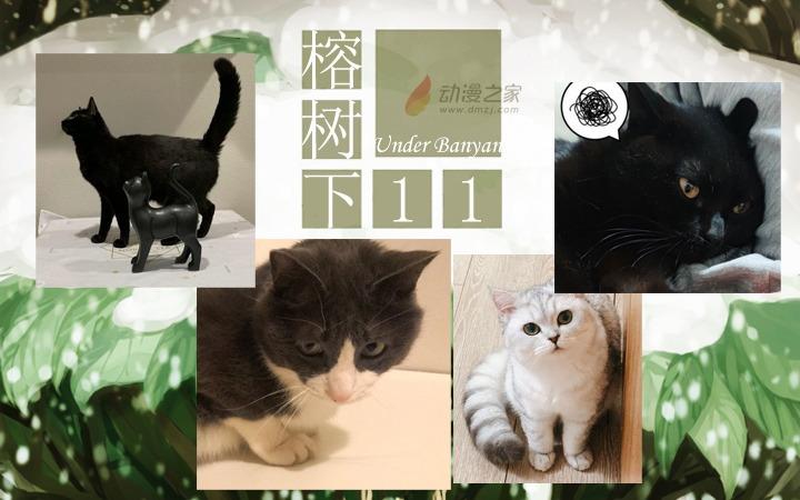 周五榕树下·汉化组的猫11编辑部的猫