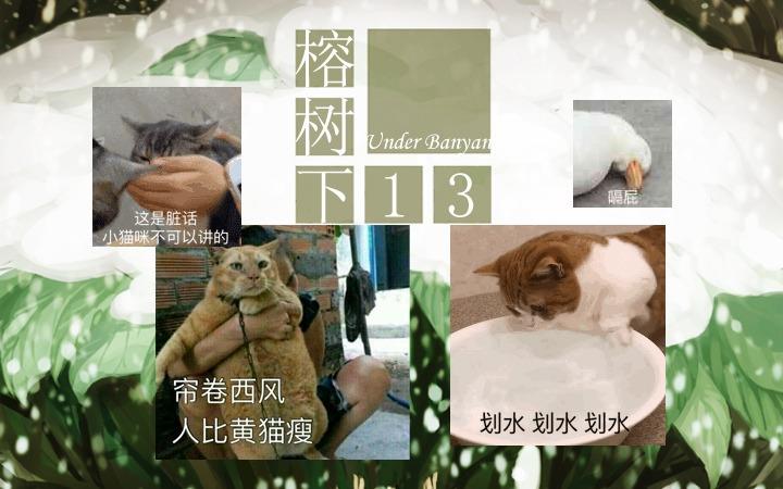 周五榕树下·猫猫表情包第二期