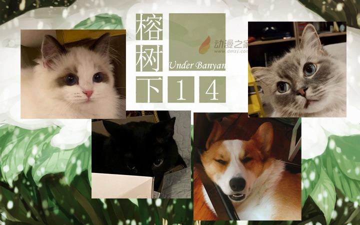 周五榕树下·汉化组的猫12小猫坨坨