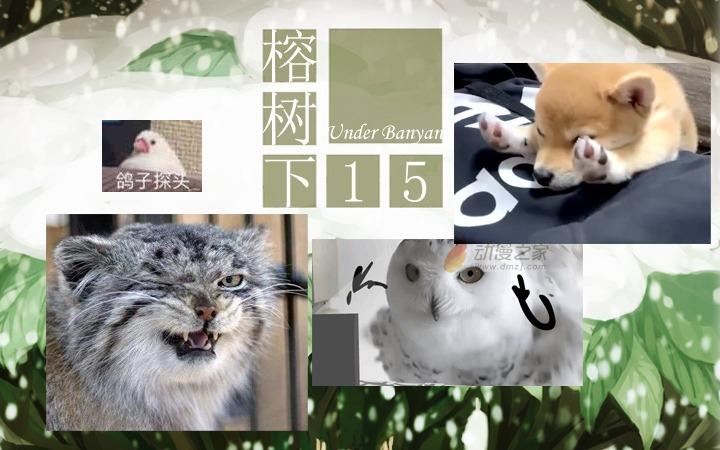 周五榕树下·猫猫表情包第三期