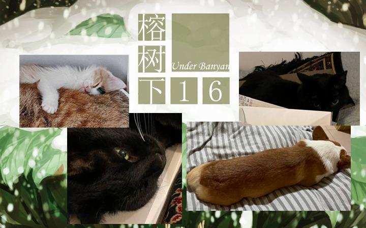 周五榕树下·汉化组的猫13编辑部的猫
