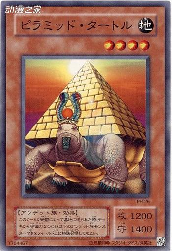 金字塔龟.jpg