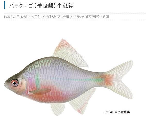 0~Y6JVSK%3ANU9`I9}L9QL7_看图王.jpg
